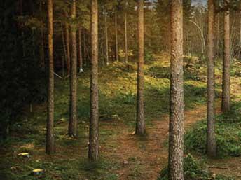 Skogen & Klimatet